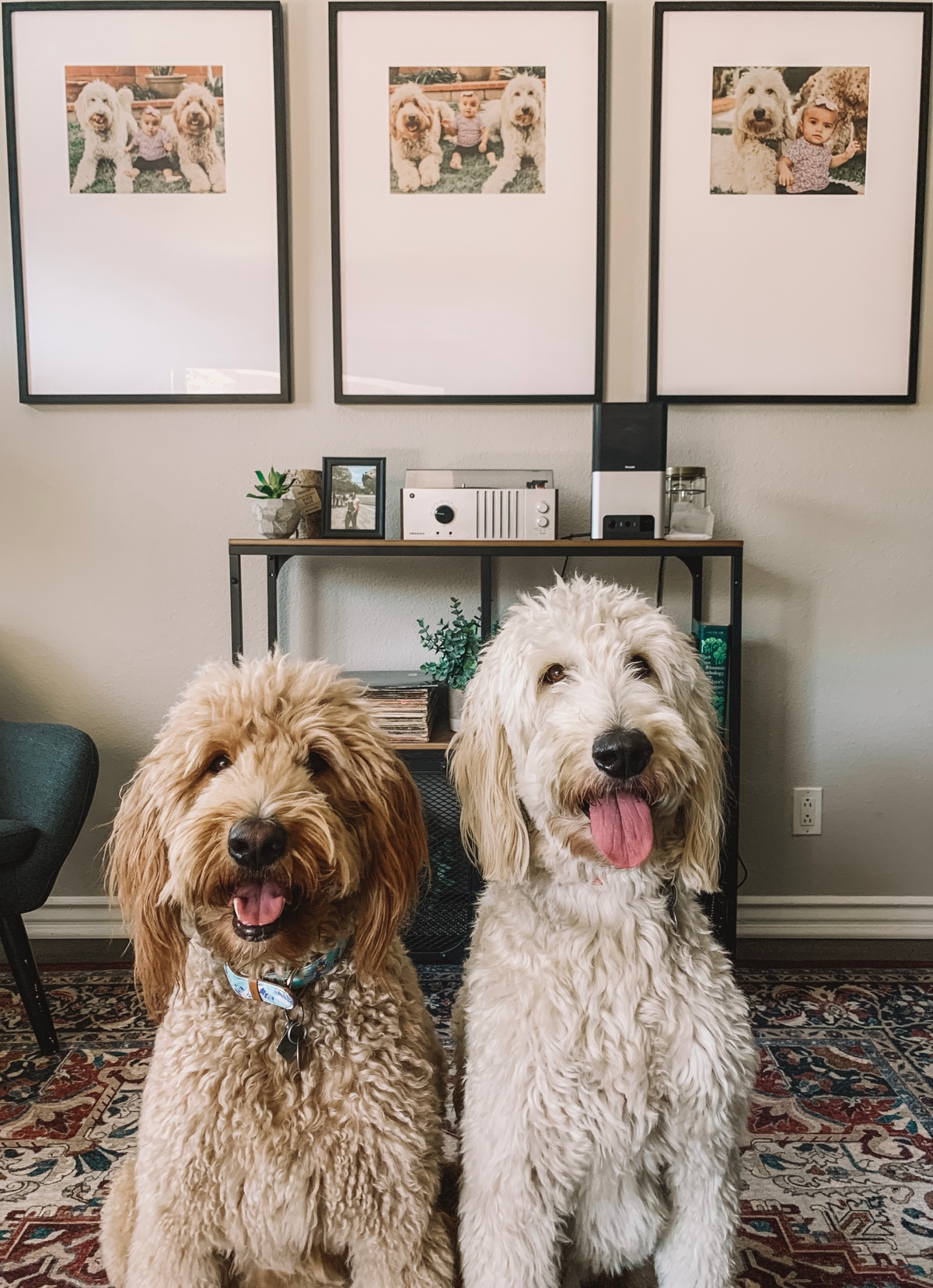 two dogs in front of triptych frames