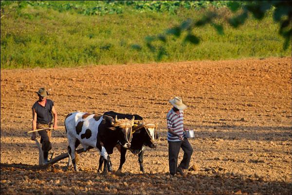 farmers in cuba