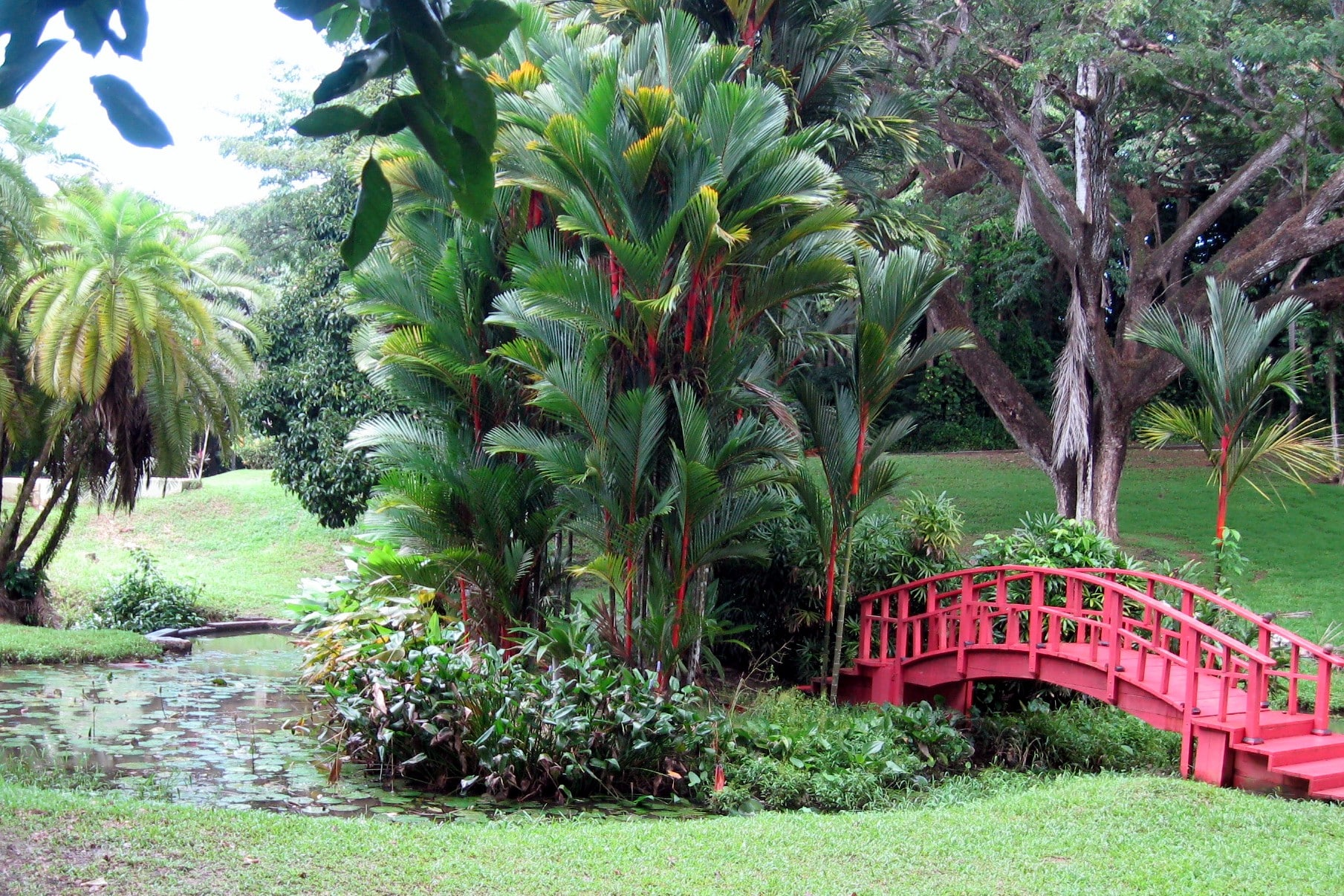 The Rio Piedras Botanical Garden is one of the places to go in Puerto Rico