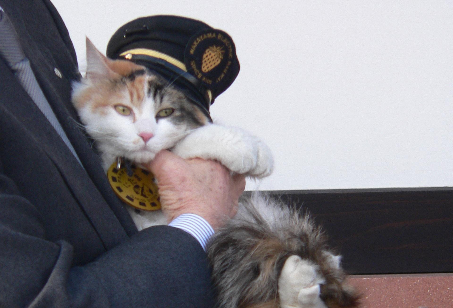 Nitama Kishi kyoto japan cat