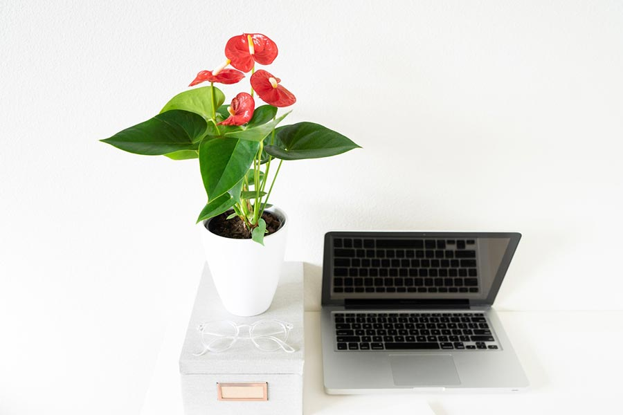 Which plants are good for a home office?