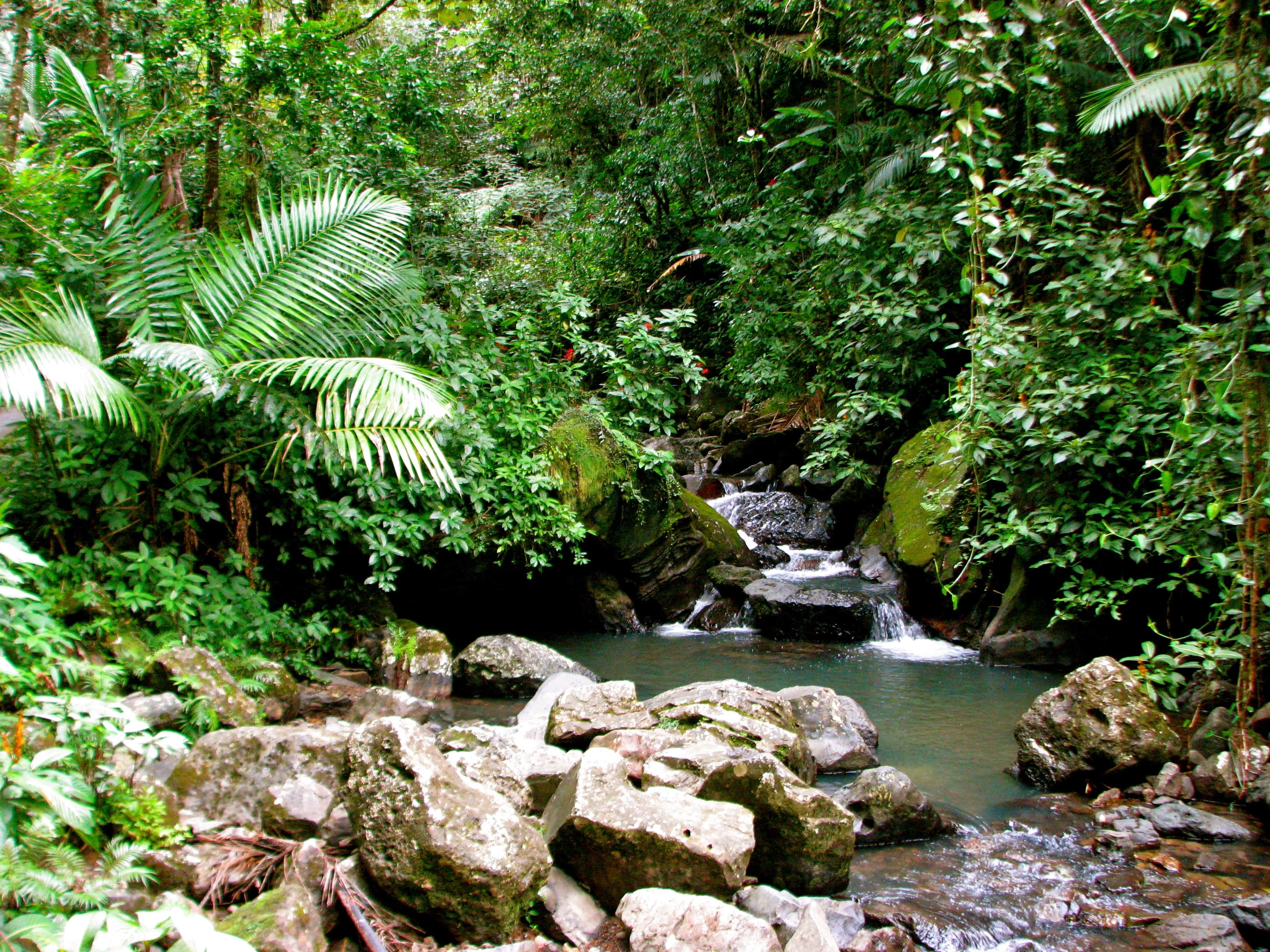 El Yunque Things to do in Puerto Rico