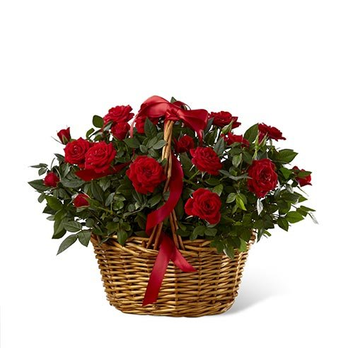 rose basket bouquet and plants safe f...