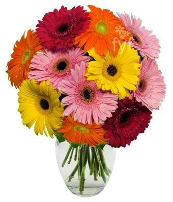 10 Stem Gerbera Daisy Bouquet