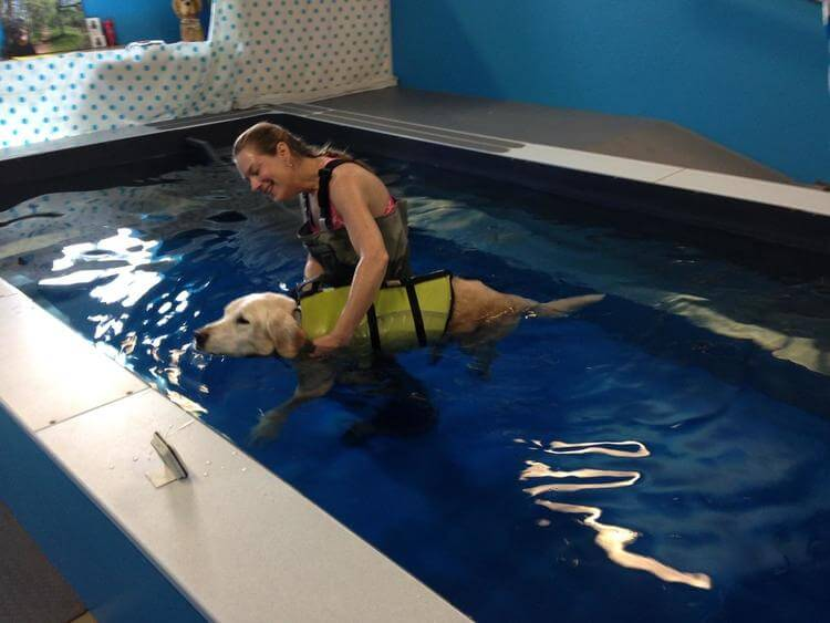 Varen Chapman takes a dog through an aquatic therapy session in her Original Endless Pool
