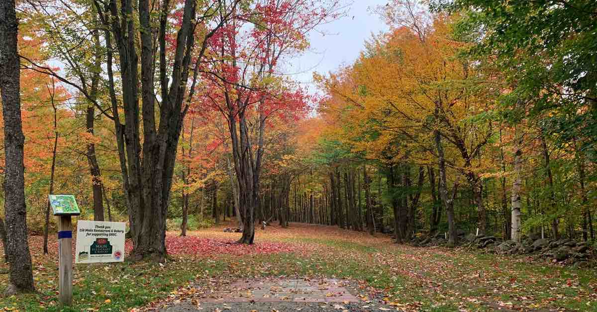 A wooded disc golf fairway with trees in fall colors