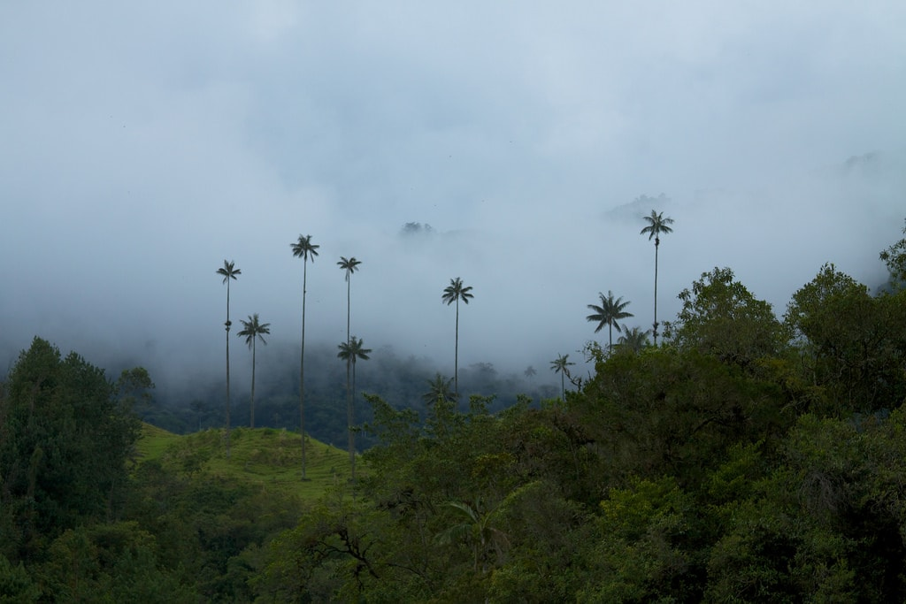 cloud forest  what to see in Colombia
