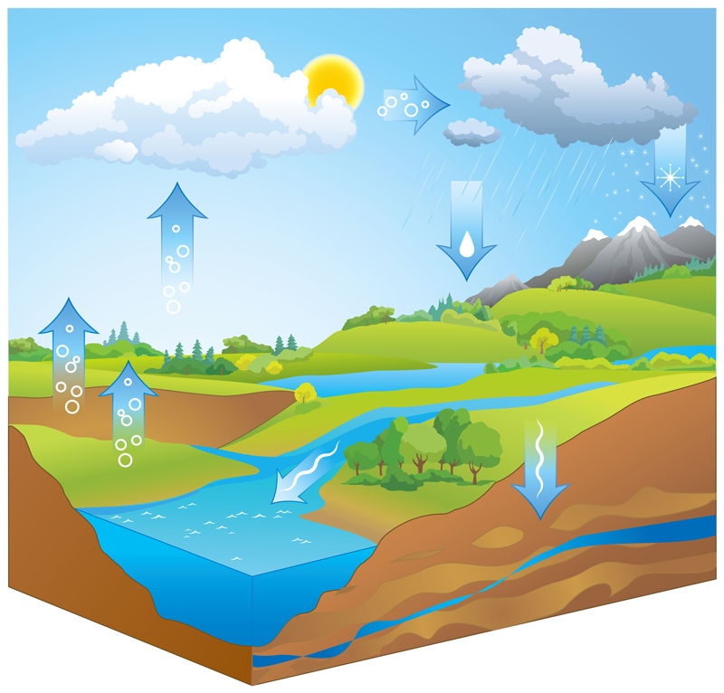 green roof soil and the water cycle