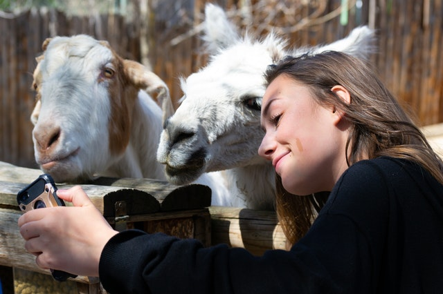 person taking a selfie with a goat at the zoo
