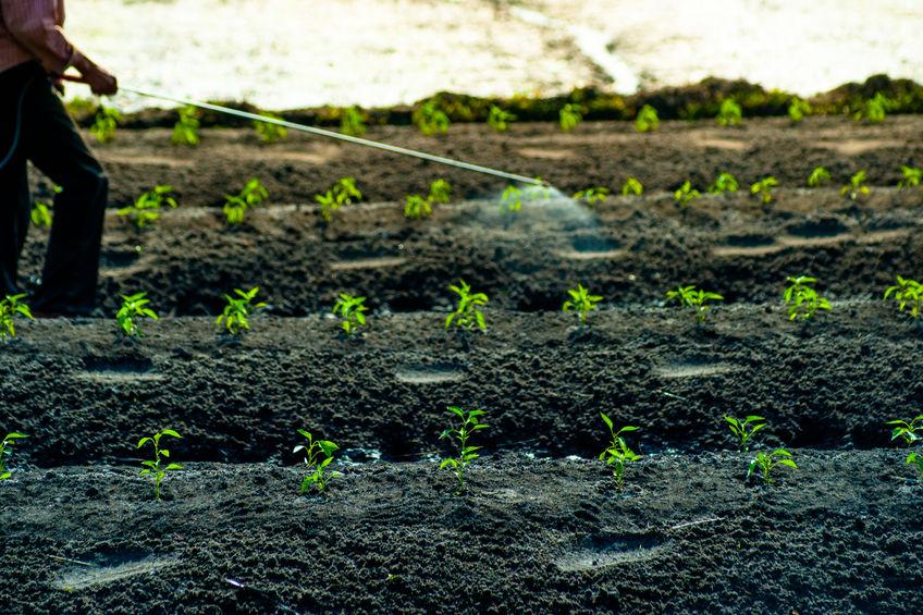 soil depletion chemicals nutrients