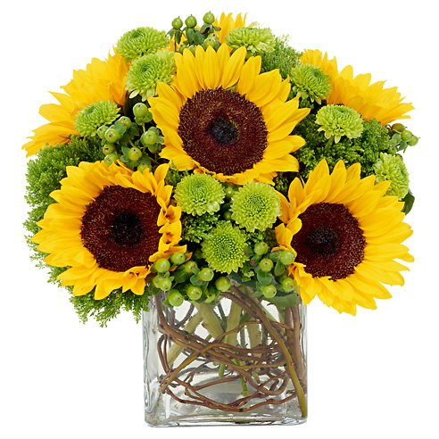 Modern sunflowers and green mums flower bouquet with vines and glass vase