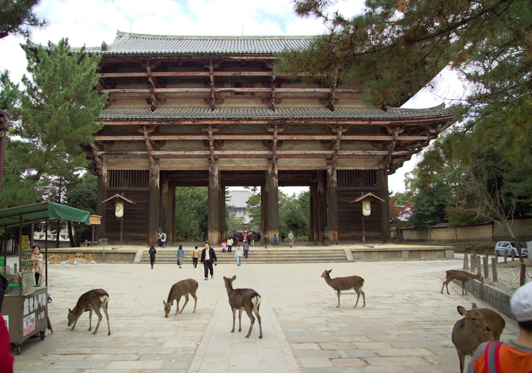 deers in Nara kyoto Japan