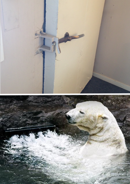 A door at Thule Air Force Base and Gus, the Central Park polar bear, in the Endless Pools swim current