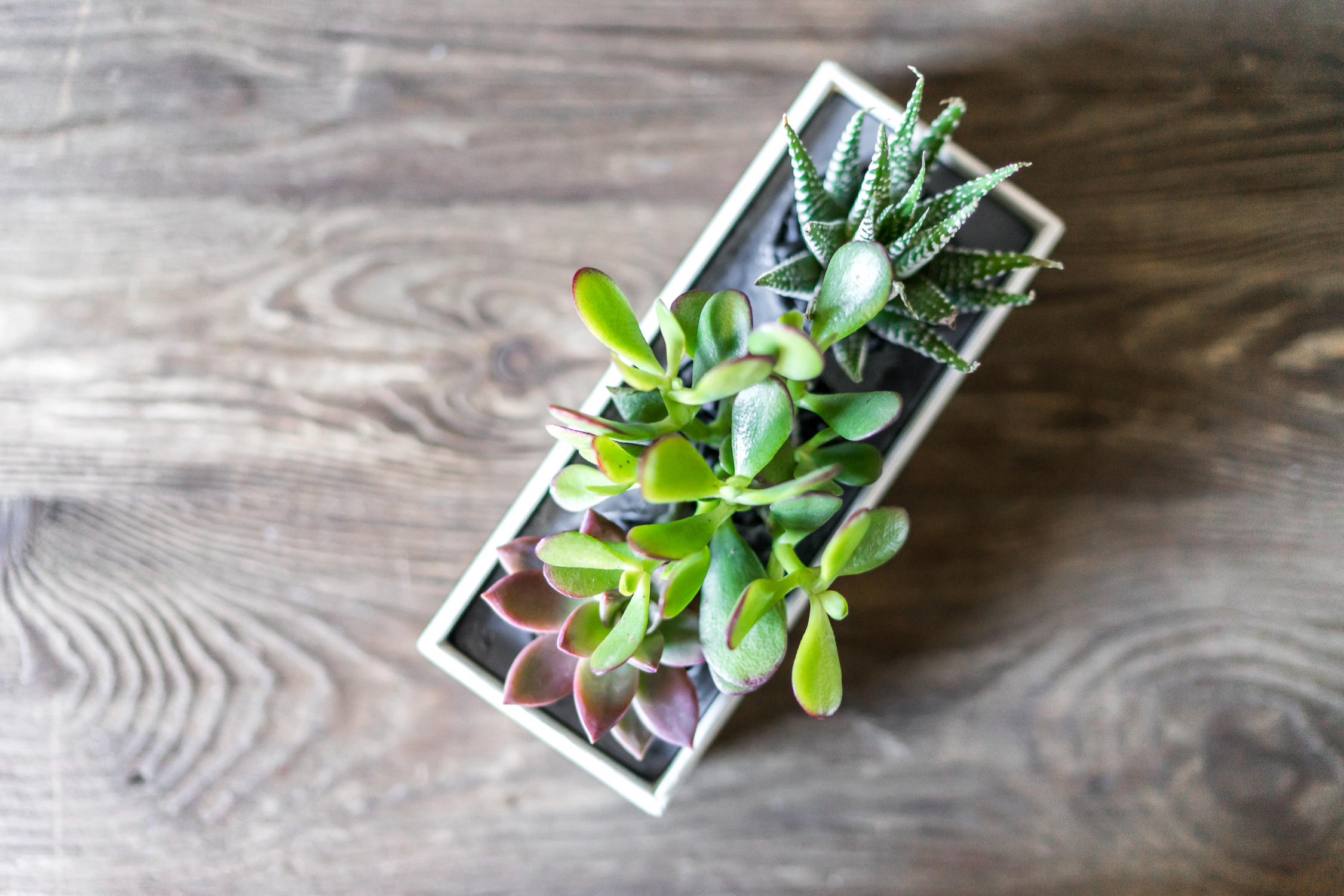 Our Favorite Types of Plants