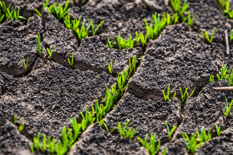 water-flow-in-soil-cracked-earth