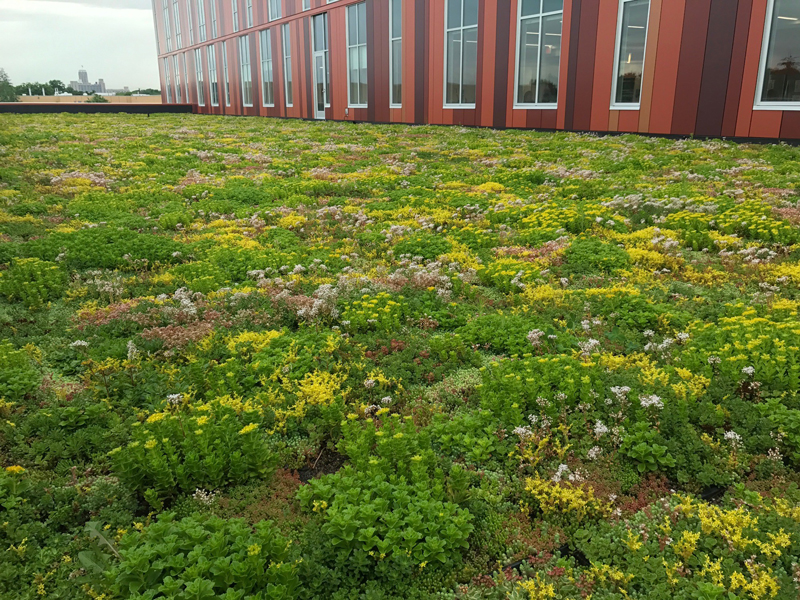 Minneapolis adult ed center green roof