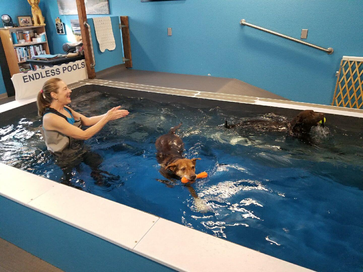 canine hydrotherapy in the Original Endless Pool at Montana Water Dogs