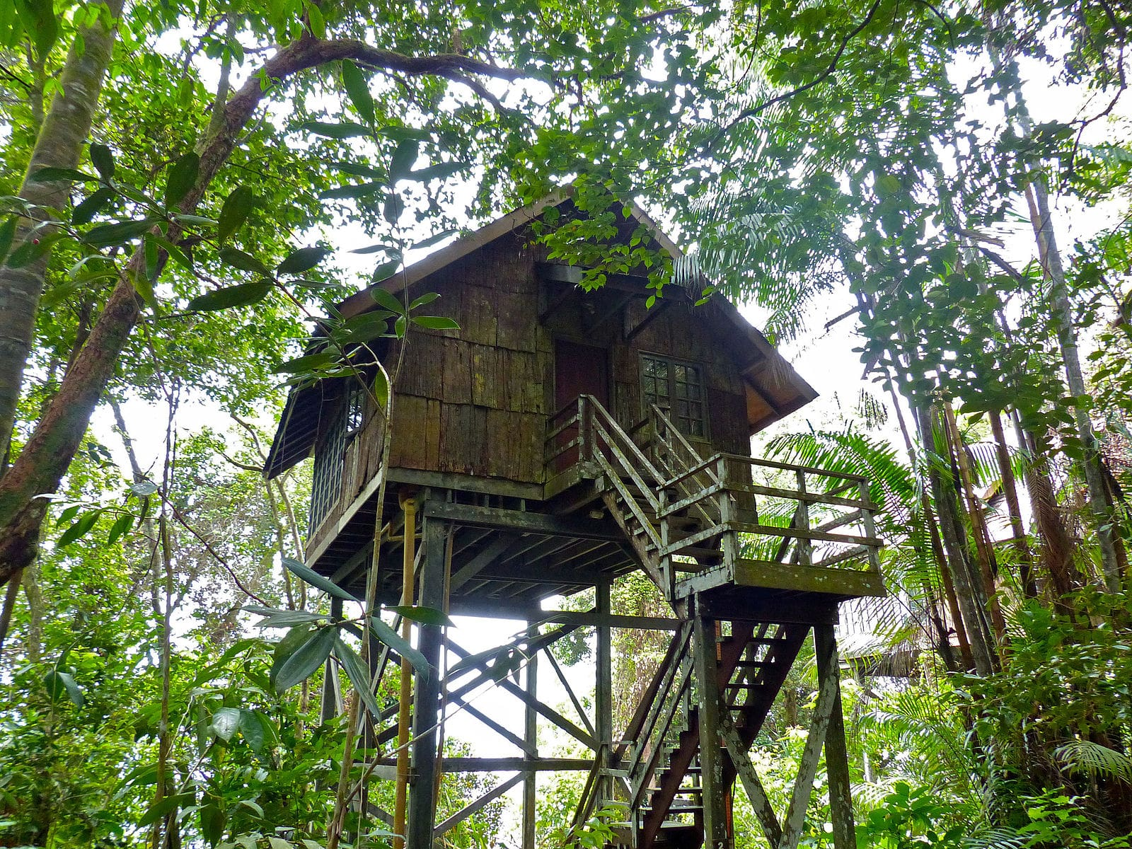 Treehouse Things to do in Puerto Rico