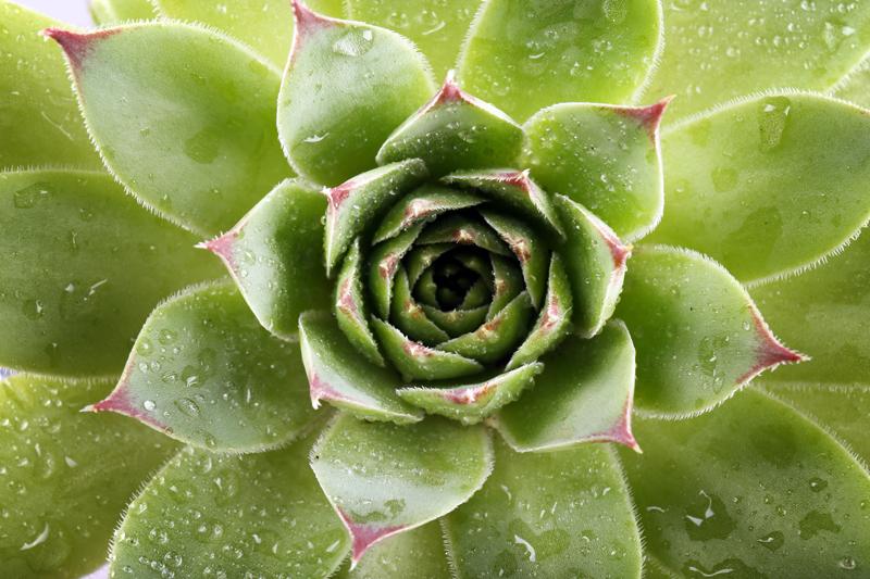 nutrient-runoff-drops-succulent