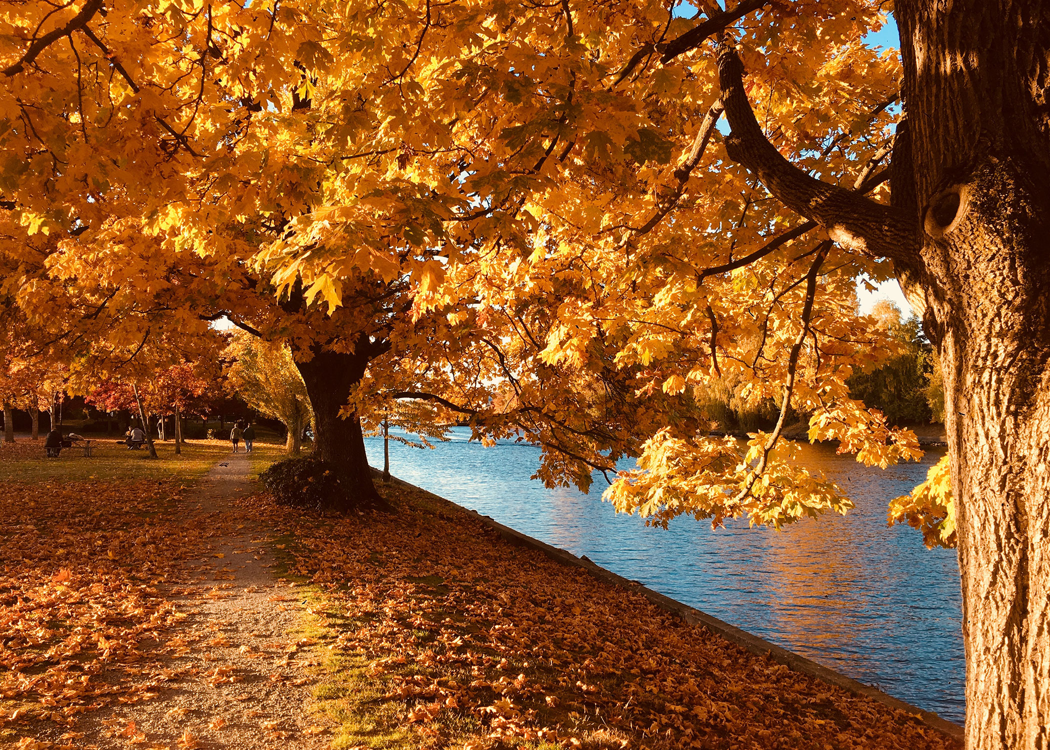 Image of 6 Best Fall Activities in the Twin Cities