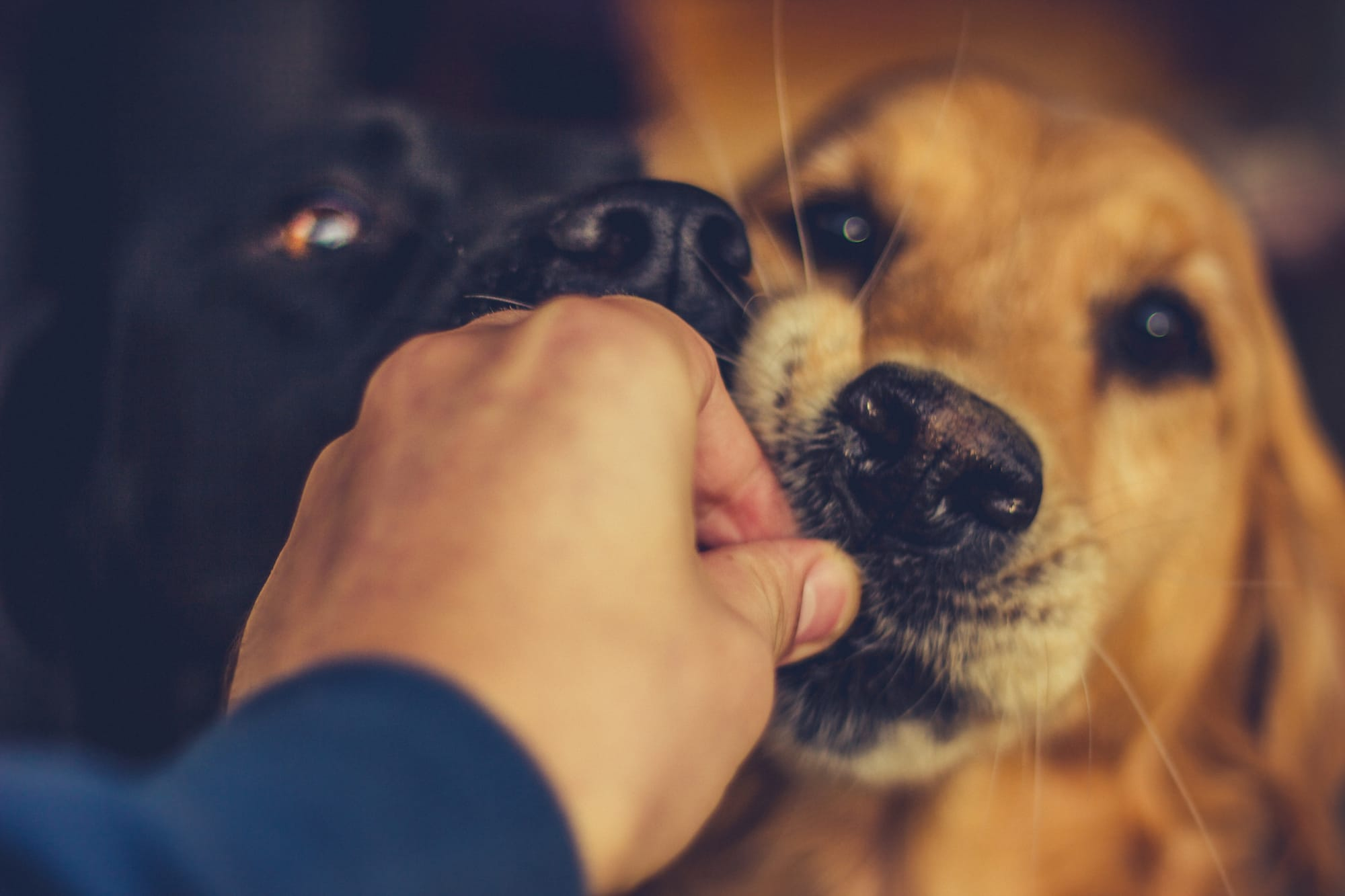 Ways to Help My Resource Guarding Dog at Mealtime
