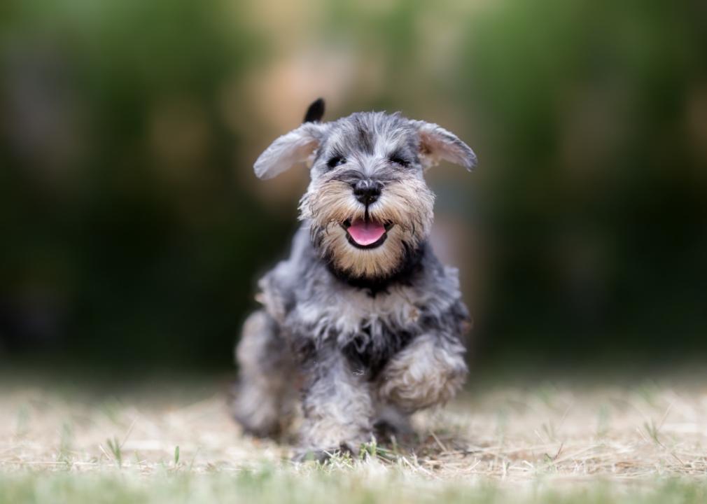 Most Popular Small Dog Breeds that Won't Make You Sneeze - Nom Nom