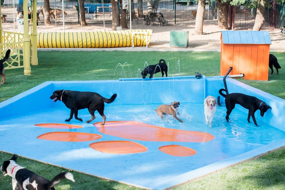 dog-playing-water