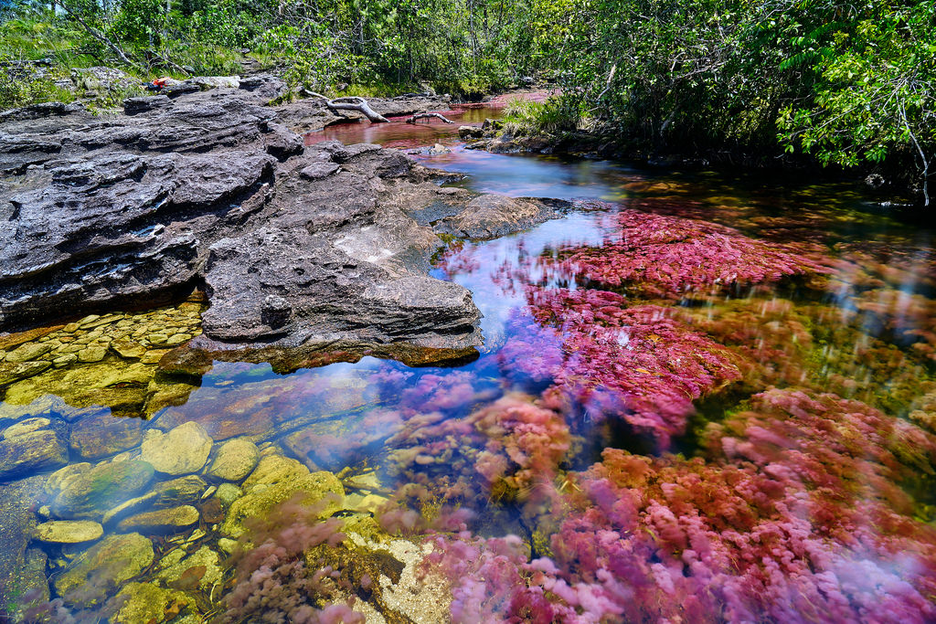 The Cano Cristales things to do in Colombia