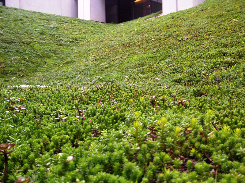 Calgary Bow Valley Square green roof
