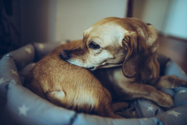Dog Skin Allergies Causes And Treatments Nom Nom