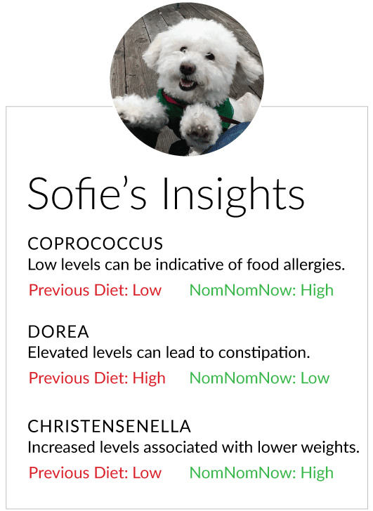 Review your pet's insights and implement changes into their plan as appropriate
