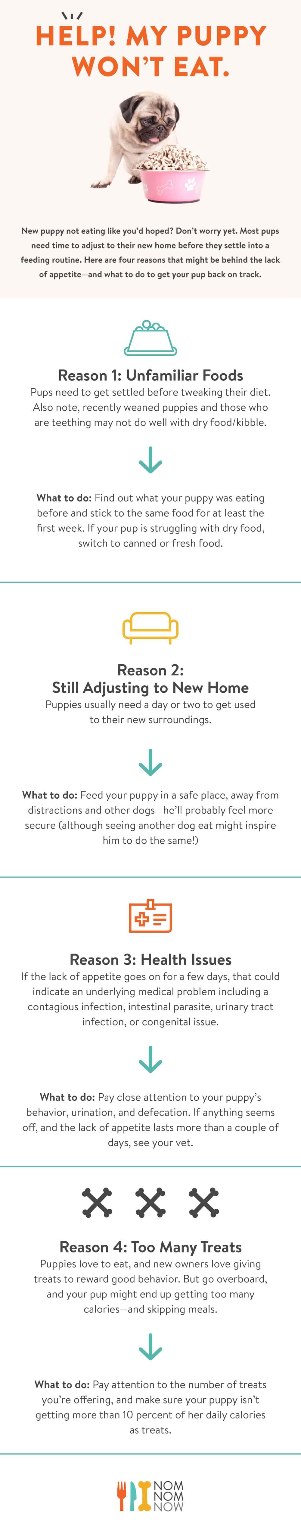 puppy_not_eating_reasons.jpg