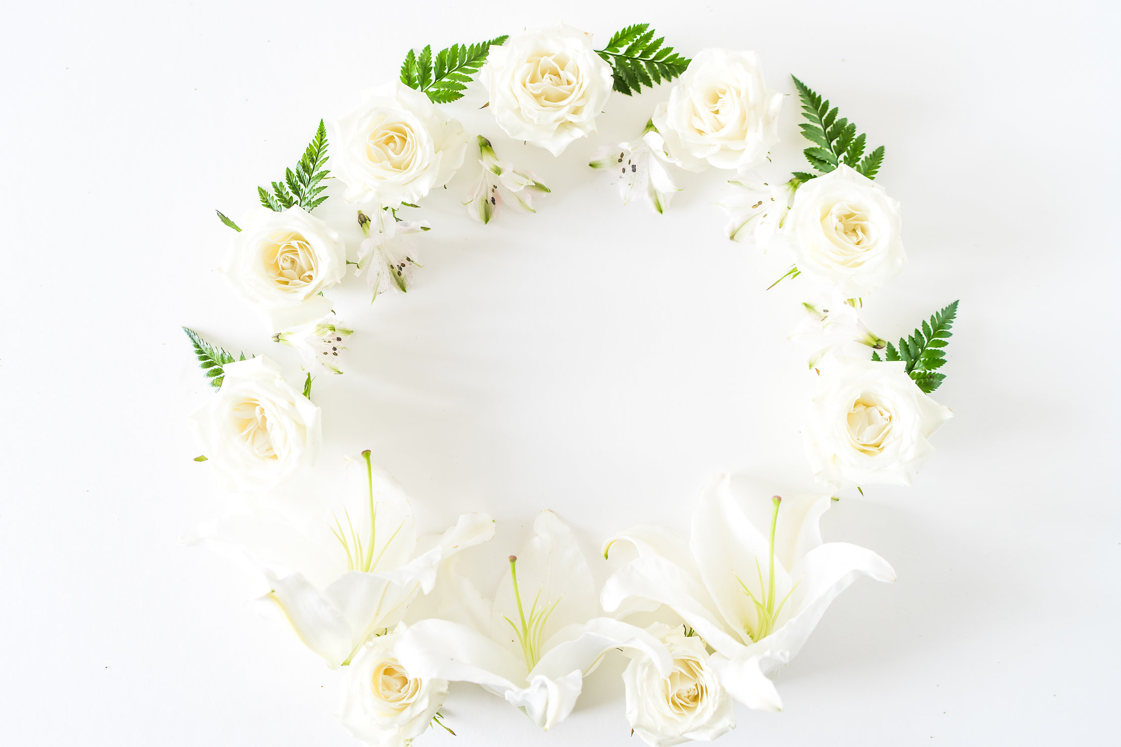 What Does a White Rose Mean?