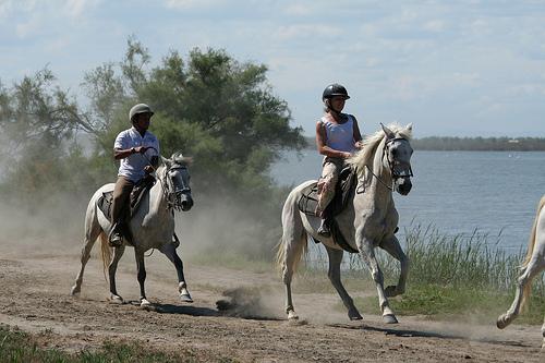photo cheval.jpg