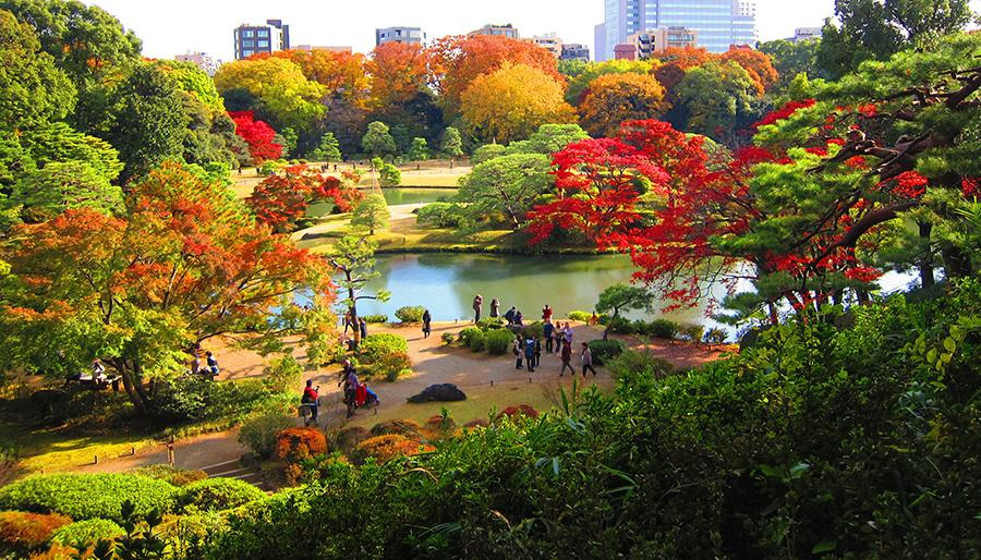 Spring and Autumn seasons is the best time to visit Tokyo