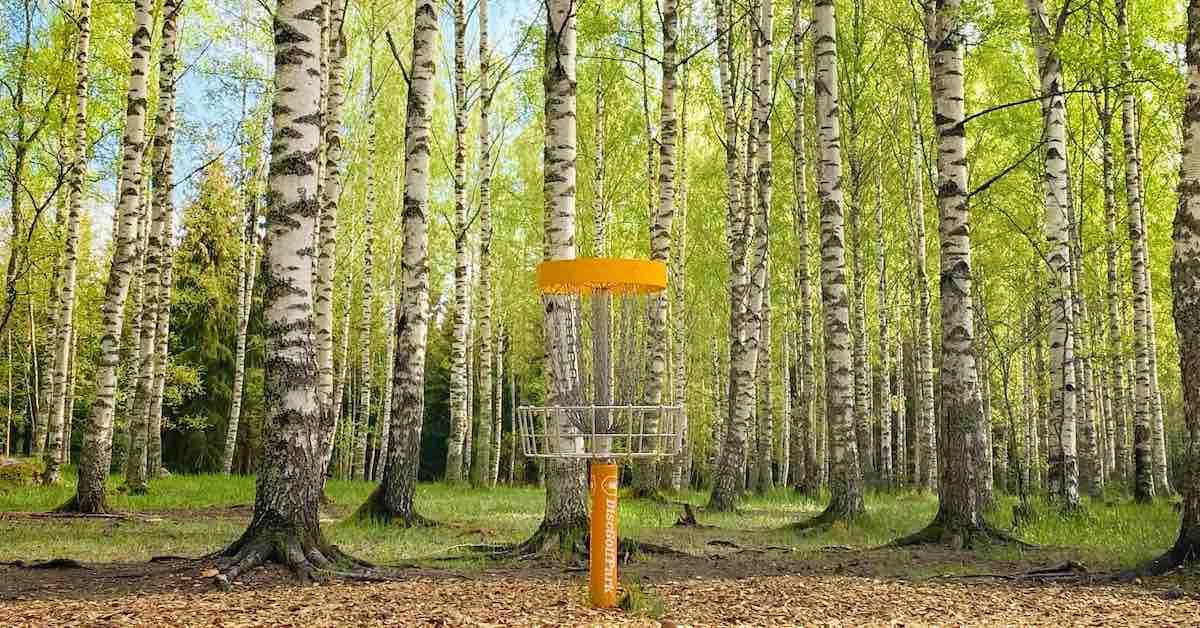 A disc golf basket in a Scandinavian birch forest