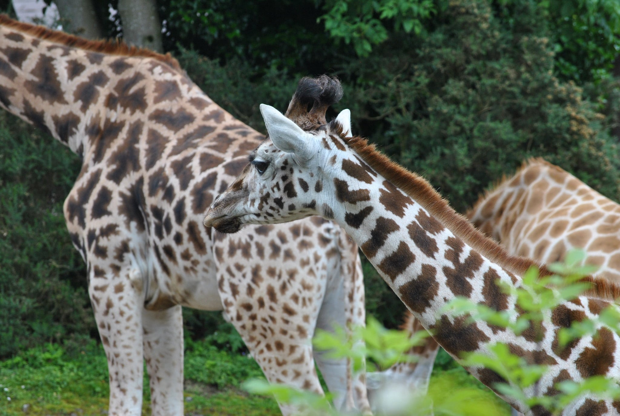 Visiting the animals at the Belfast Zoo is a great thing to do in Belfast Ireland
