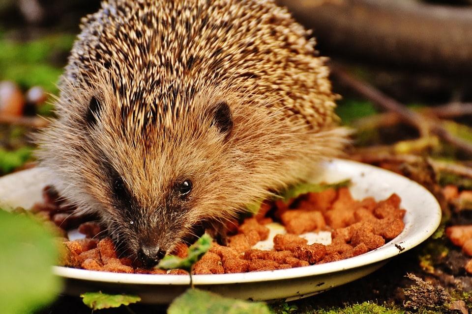 Harry Hedgehog Cafe in Tokyo Japan