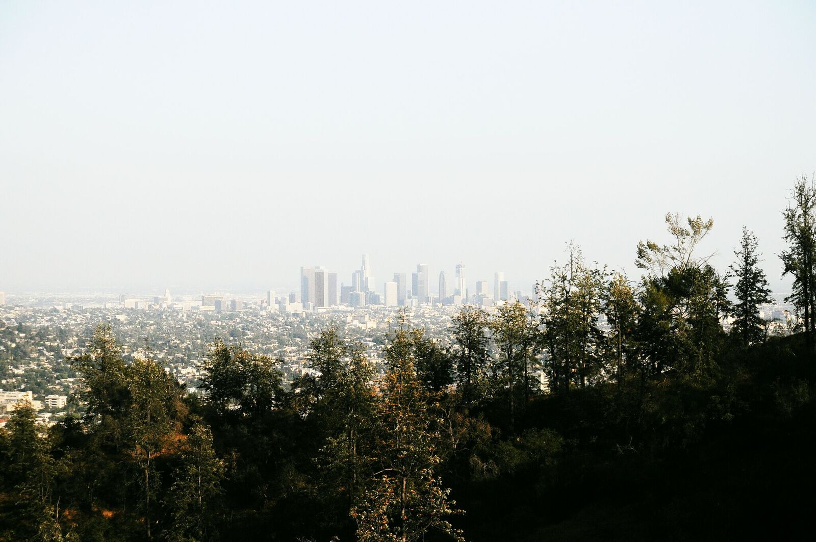Image of 5 Things Every True Angeleno Knows