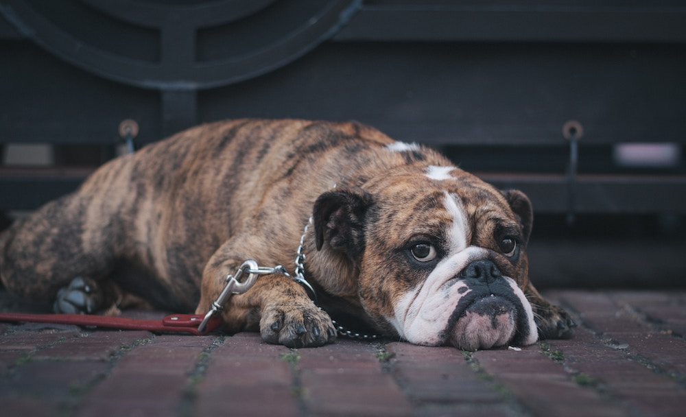The Link Between Gut Microbes and Your Pet's Brain