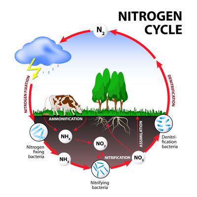 green roof plants nitrogen cycle