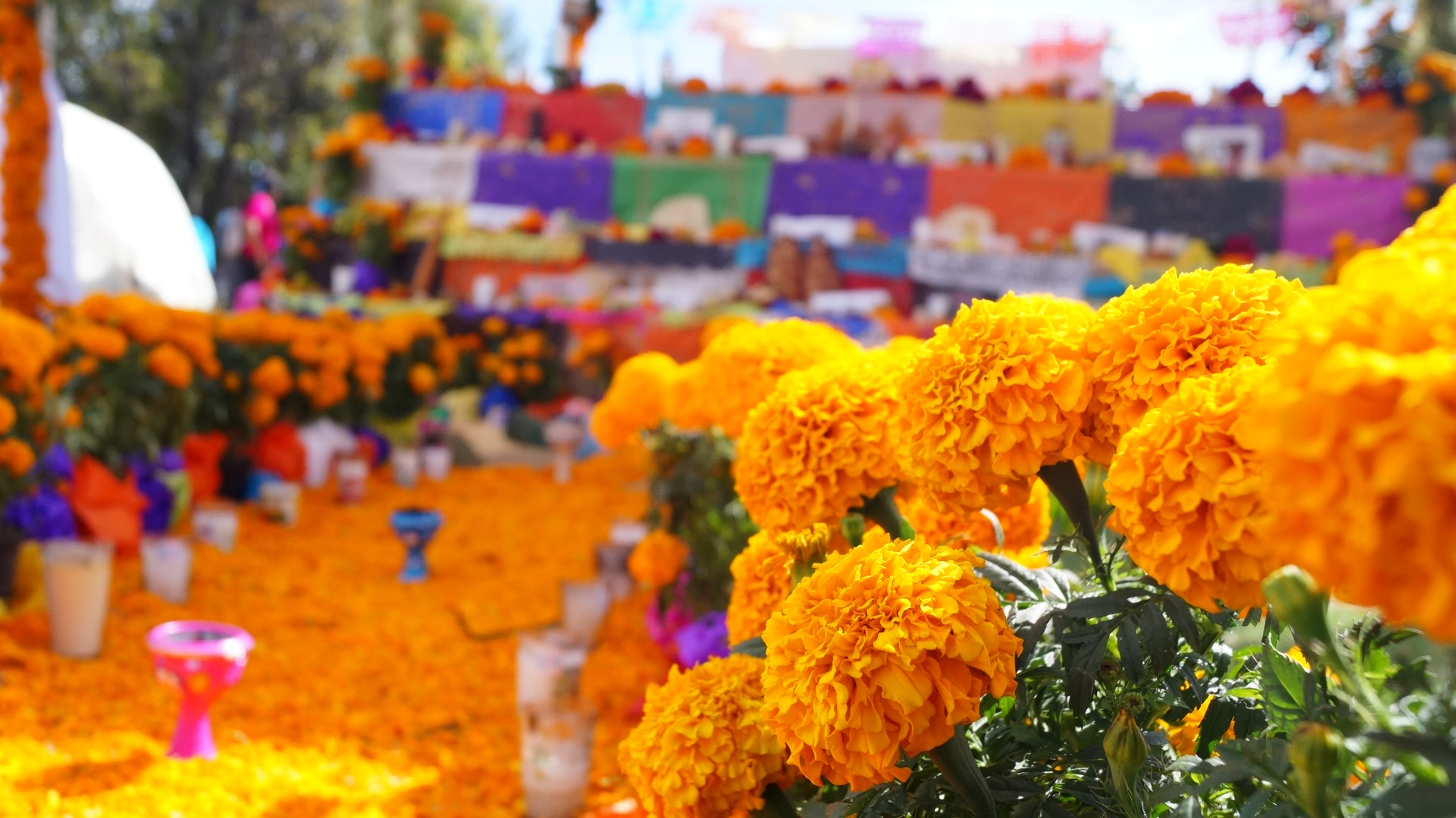 colorful buildings and yellow flowers at medellin flower festival colombia