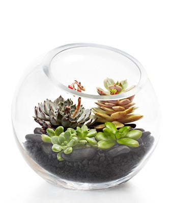 All About Terrariums