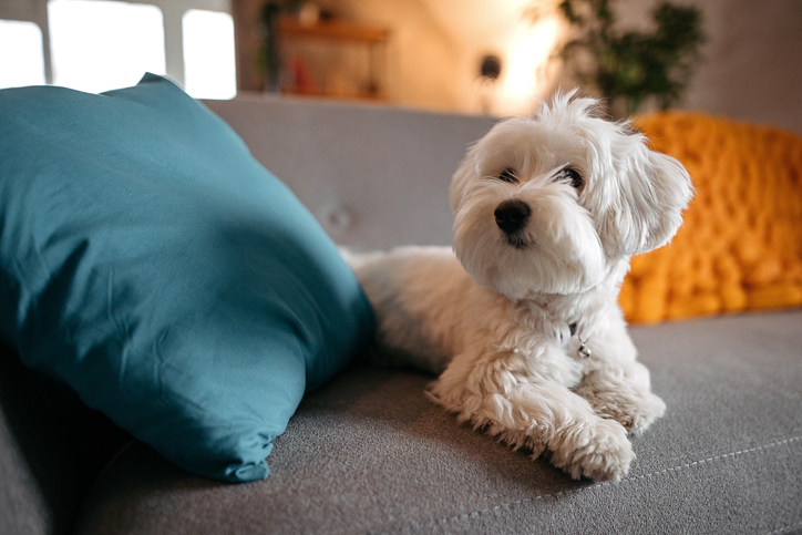 Image of 7 Steps to Finding a Pet Friendly Apartment Rental