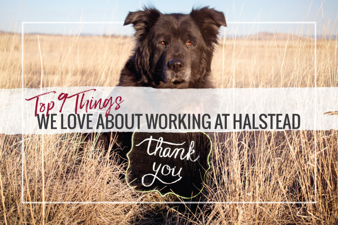 Our employee survey revealed the top 9 reasons people love working at Halstead. See what makes our culture unique and learn about your jewelry supplier.