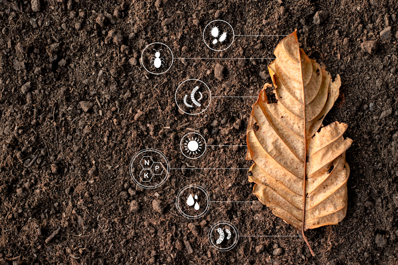 dead leaf on soil showing plant nutrition icons