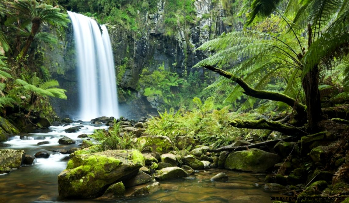 Private hike in El Yunque to the hidden waterfall is one of the expedia Puerto Rico excursions ViaHero loves