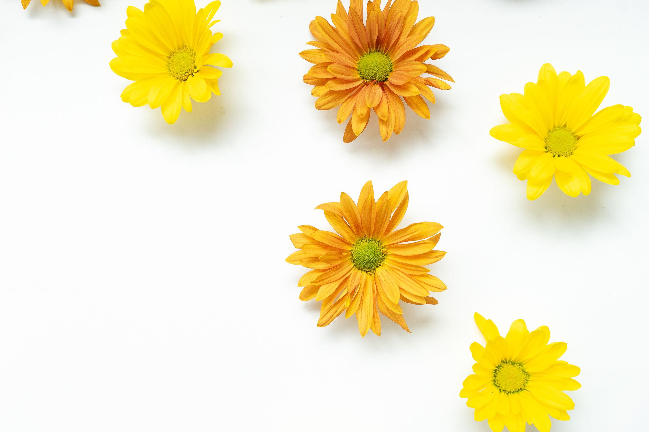 Fall Daisy Wallpaper.jpg