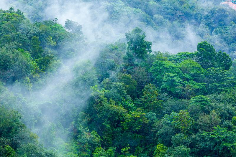evapotranspiraiton-forest-mist