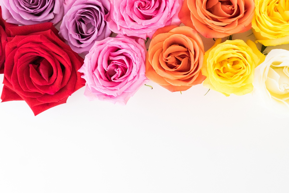 What Color of Rose Means I Miss You?